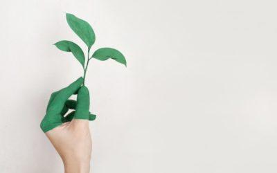 3 erreurs courantes des entreprises éco-responsables
