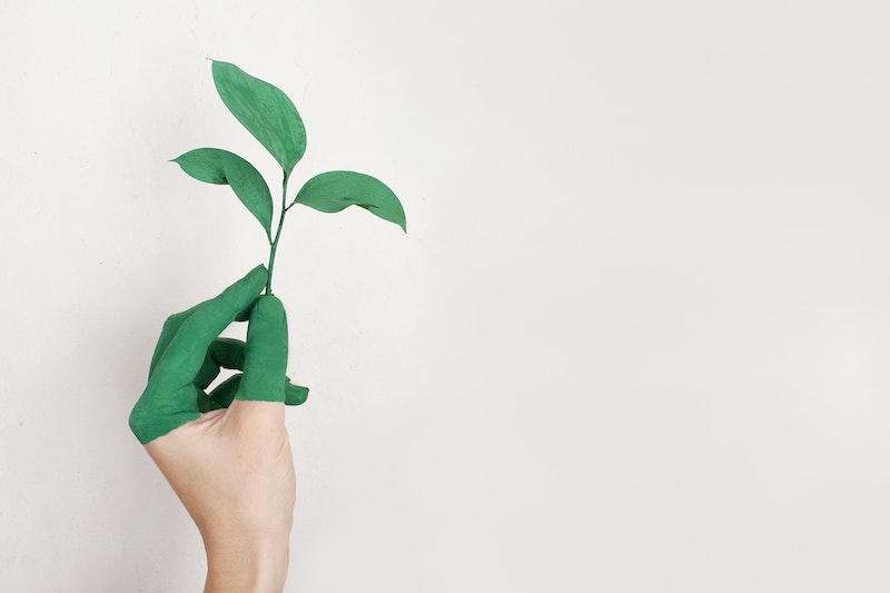 entreprises éco-responsables