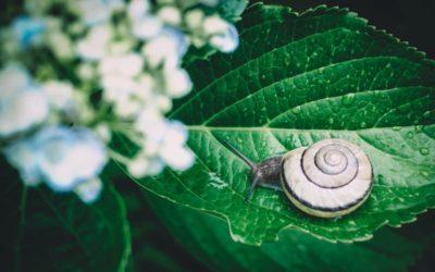 Slow content : pourquoi vous devriez l'adopter sans hésiter